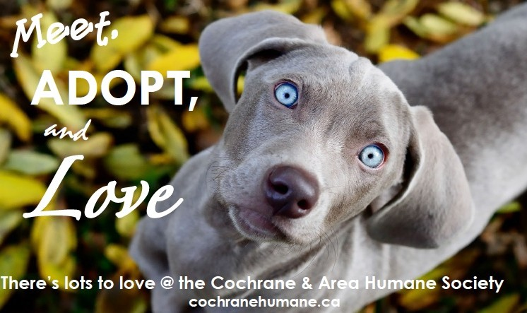 Meet Adopt Love