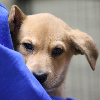 Cochrane Humane Society Dogs For Adoption