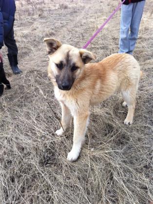 Cochrane Humane Society Dogs For Adoption