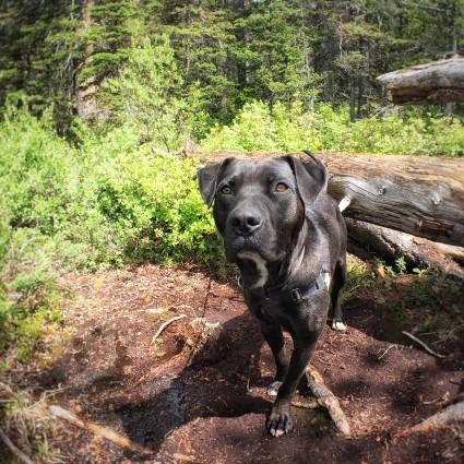 Cochrane Humane Soociety Dogs