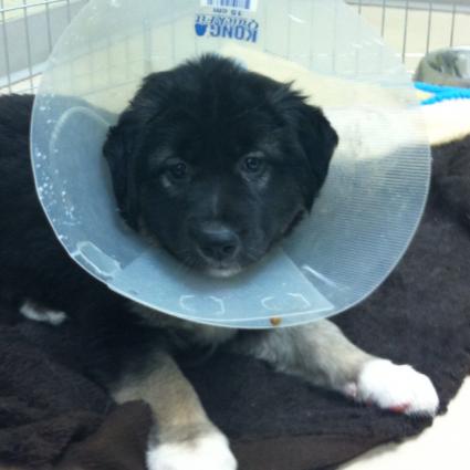 Dogs For Adoption Cochrane