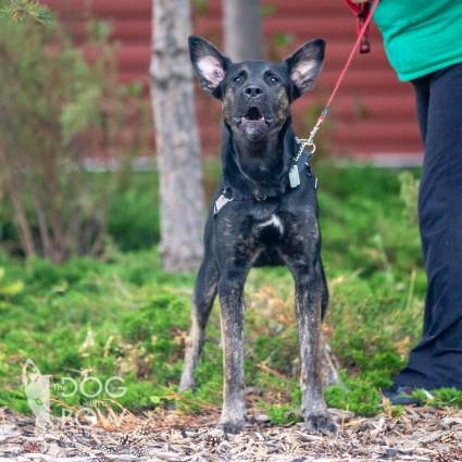 Humane Society Dogs Bandit Name For Adoption
