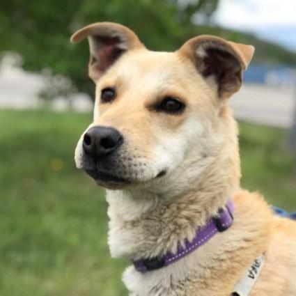 9893e56afb5 Dogs for Adoption – Cochrane & Area Humane Society