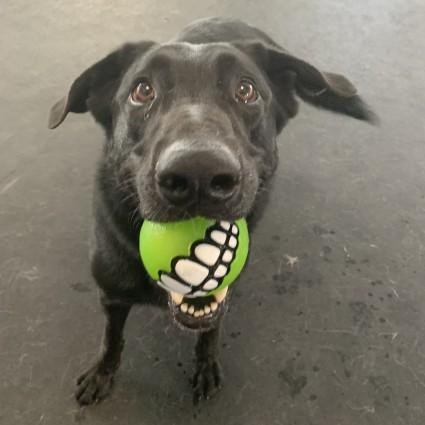 Dogs for Adoption – Cochrane & Area Humane Society